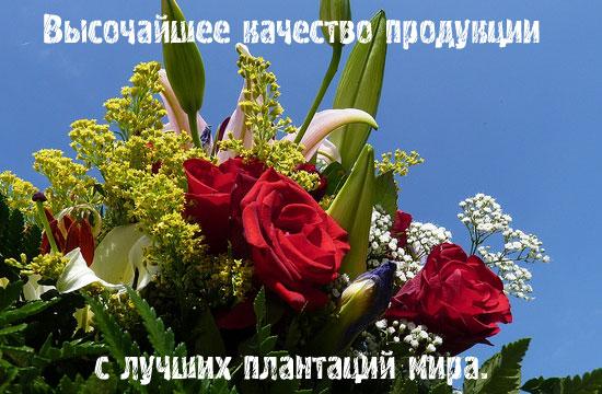 Комнатные цветы и горшечные растения купить в интернет